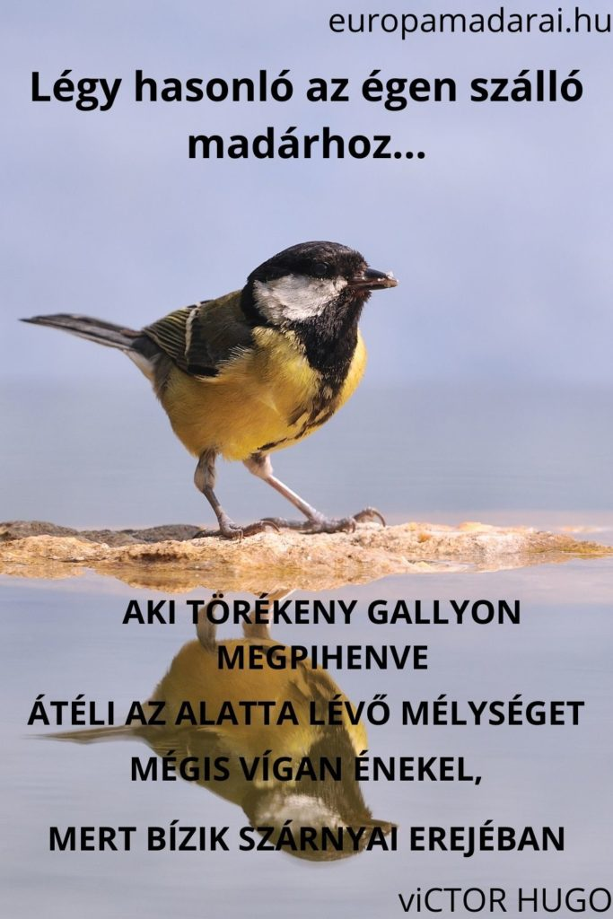 madár idézetek